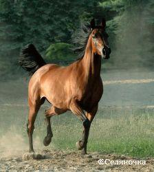 Необыкновенности в питании лошадок