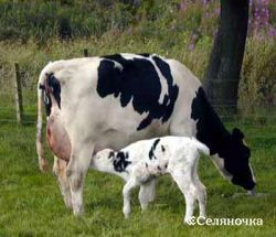 Причины, действующие на степень молочной продуктивности скотины