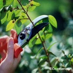 Отрезка деревьев