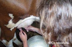 Доение и гигиена получения молока