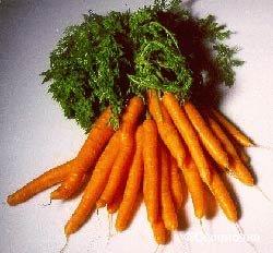 Морковь южноамериканского сорта
