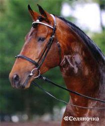 Болезни желудочно-кишечника у лошадок