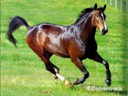 Выбор коня-производителя