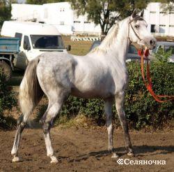 Редкие породы лошадок