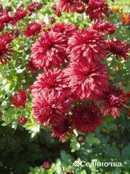 Растения,расцветающие в осеннюю пору
