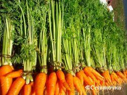 Морковь: узелки на память