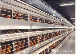 Содержание промышленного стада кур-несушек