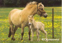 Воспроизводство и выкармливание лошадок