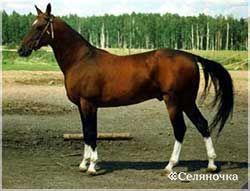 Ахалтекинская лошадка