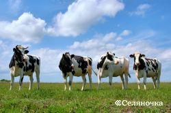 Питательные характеристики генеральных кормов для большущего рогатого скота