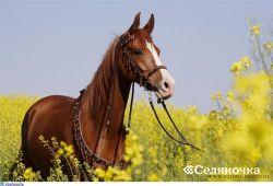 Респираторные болезни лошадок