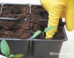 Подготовка зёрен к посеву
