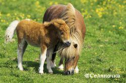 Жаждете собственного пони?