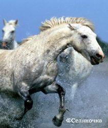 Лошадка - выбор породы и ее био индивидуальности