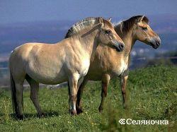 Воспроизводство лошадок